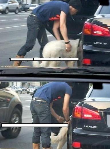 金九爷的狗狗从车窗跳出来了