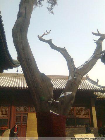 引用 常平关帝家庙 - 杨毅 - 尚义轩杨毅剪纸