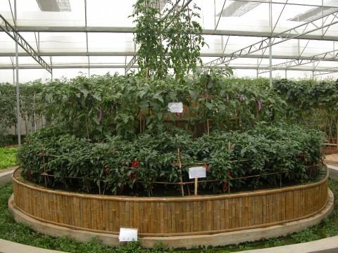 蔬菜公园 - 阳春白雪 - yang2004710的博客