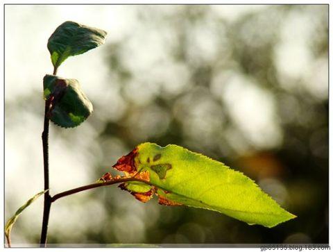 六月荷花摄影诗歌《枝叶情》20 - 六月荷花 - 六月荷花的池塘