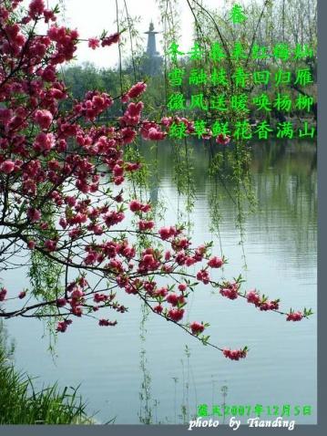 原创-古体-《春》文/光明之子 - 光明之子 - zhengchaoying博客
