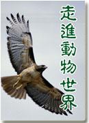 百家讲坛-走进动物世界全文在线阅读