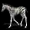 最全的动物透明动画