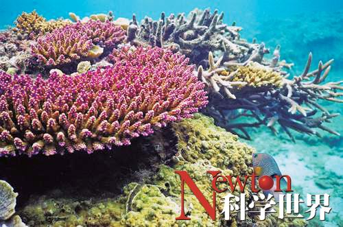 沉船威胁珊瑚礁生存 - kxsj - Newton-科学世界