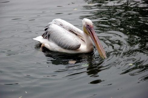 补牙后去动物园水禽湖鈥斺05.23.08