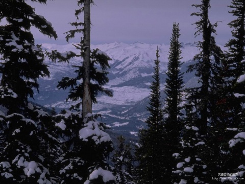 冬天的树 - 好心情的日志