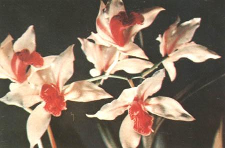 明文学家冒襄赞钱帮芑气节如兰花 - 娄义华 - 娄义华的作品空间