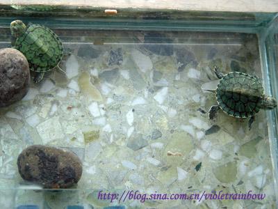 乌龟们冬眠了