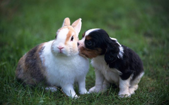 兔年快乐!