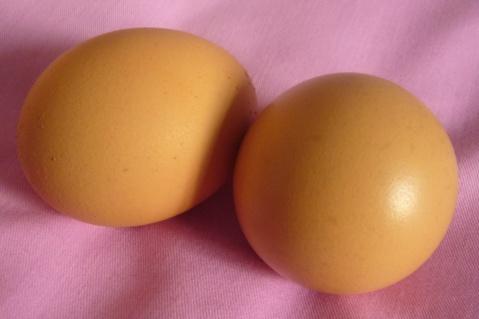 [原创]赵本山言而有据,公鸡果然能下蛋? - 苍天在上 - 天高云淡