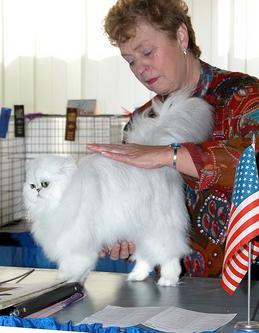 转贴-[精] 带猫到处去参加CFA的猫展比赛到底要花多少钱?