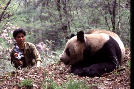 北大才子的青春悲歌,拿什么拯救你——我可爱的野生大熊猫? - 行者 - 旅游卫视《行者》官网博客