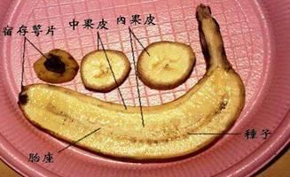 熟透的香蕉 - 明心見性 - 明心見性的博客
