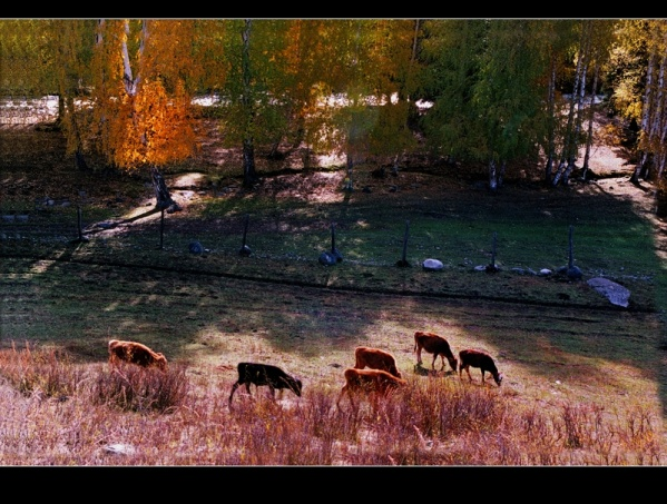 [原创]神圣芳草地---爱的奉献(1) - 雪山老人 - 雪山老人的博客