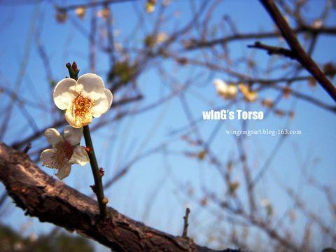 2009年1月13日 - ш í л g - wInGs Torso