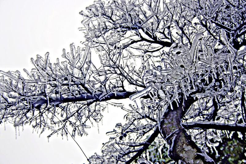 [原创]冰中树——冰灾记忆之十二 - 歪树 - 歪树