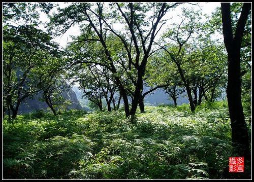 [原]静谧的小树林 - 多言 - 我色我乐 我言我心