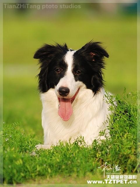 各种狗狗及身价 - 真光 - 真光 的博客