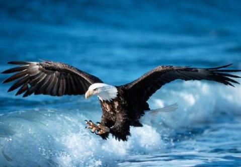 我心飞翔 - 我心飞翔 - 我心飞翔