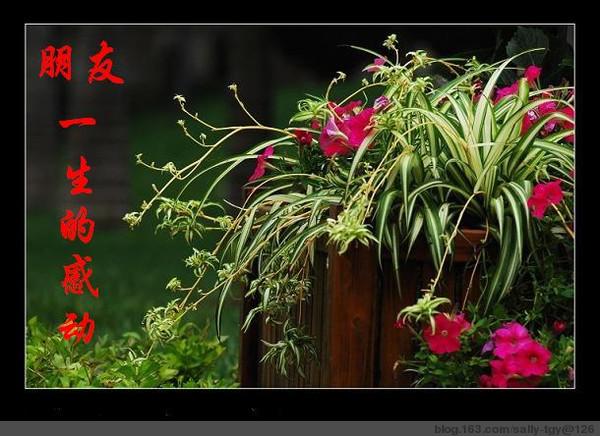 精美的祝福图片 - 风雨真情2008 - 风雨真情的温馨家园