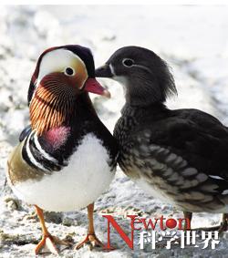 爱情鸟儿忠贞吗? - kxsj - Newton-科学世界