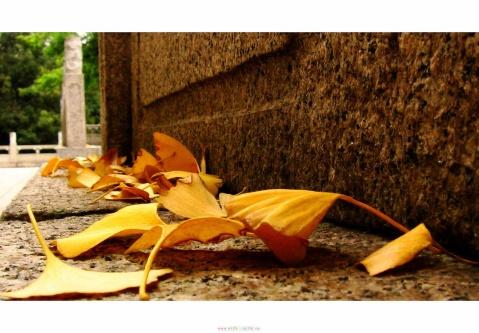 已站在了季节的风口 - 诗情若心 - 诗情若心--若的微语世界!