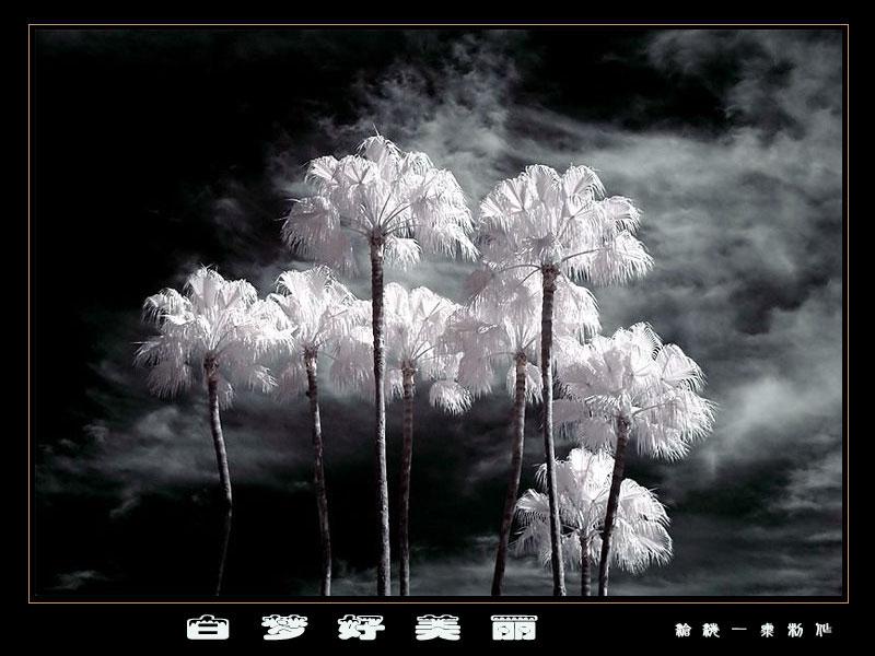 雾凇:绝美的震撼 - h_x_y_123456 - h_x_y_123456的博客