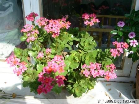 我家的阳台 - 平地草堂 - 平地草堂