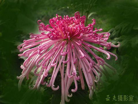(原创)技高德馨 - 高山长风 - 亚夫旅游摄影博客