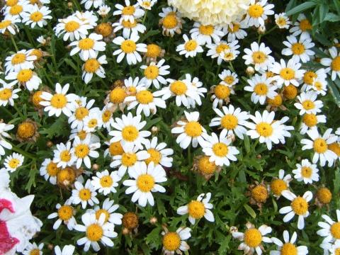 路边的小花[照片] - 叶红 - 给自己一个理由,让自己活得更精彩