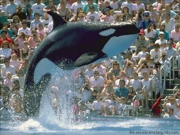 【动物世界】 巨型鲸鱼