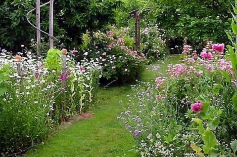 梦中花园 - 阳光不锈 - 懒阳撕冰的个人博客