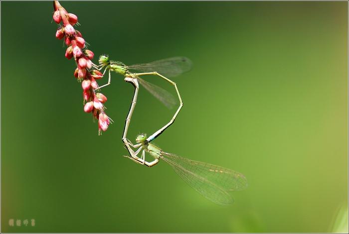 [原创]爱的挺累 - 迁徙的鸟 - 迁徙鸟儿的湿地