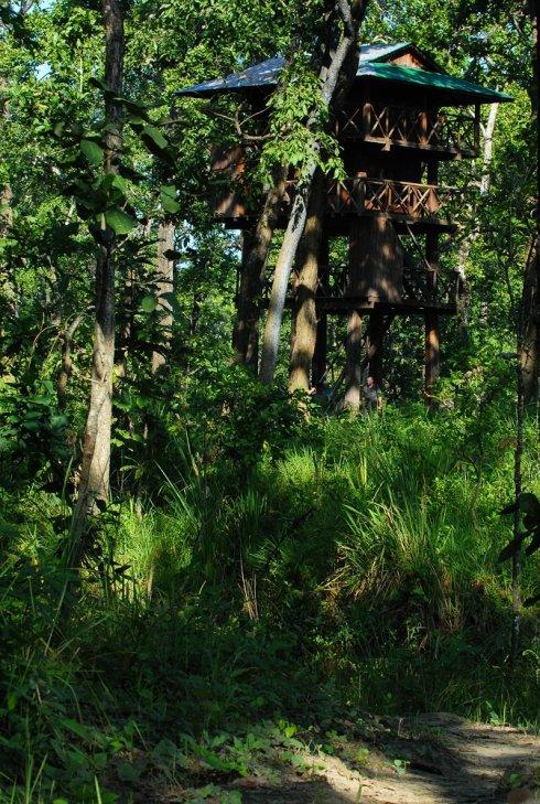 象背上的奇特旺公园《重返尼泊尔之十九》 - Y哥。尘缘 - 心的漂泊-Y哥37国行