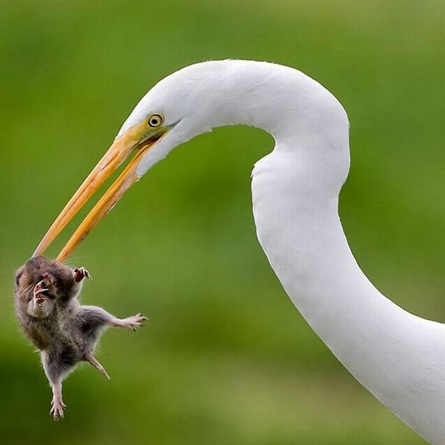 简直太漂亮了!2010年度动物精彩大片,有图有真相 - 搜狐白社会 Beta - 鸟语花香 - 鸟语花香
