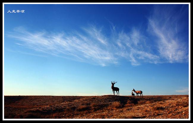 美丽的北疆(8)——布尔津五彩滩 - 人走茶凉 - 人走茶凉的博客