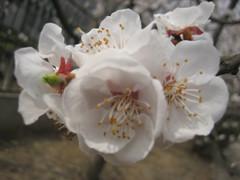 梅园情思 - mei.hua.xian.zi - 欢迎来到梅花仙子的博客