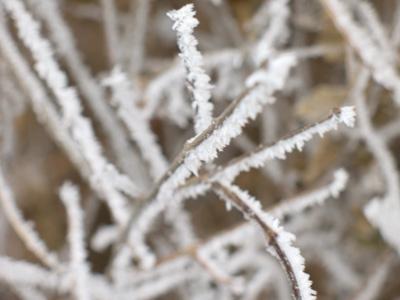 沈阳的冬天其实很美(组图) - 余英 - 余英 的博客
