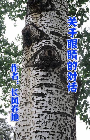 《天于眼睛的对话》作者:长风卷地 - dl3040 - 大连天健3040论坛博客