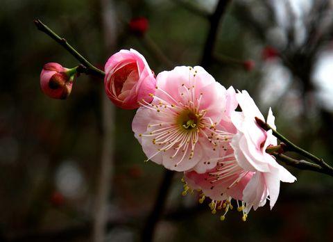 2009 早春 - Perceval - 田园将芜,胡不归!