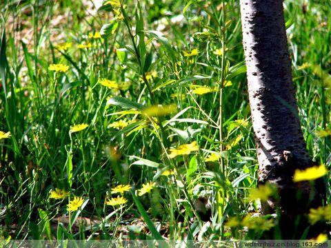 走进这片小树林(附照片) - MOMO - MOMO 的博客