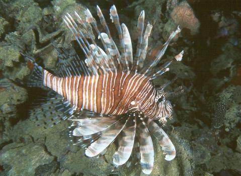 色彩斑斓的海洋鱼类  - 愚人 - 愚人 似愚非愚 愚与形而慧与心