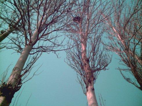 燕山毁林事件之二:我要为白杨树打官司 - 何三坡 - 燕山何三坡