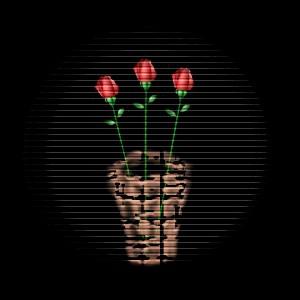 黑色背景 (花系列) - 金钥匙∷博客(2) - ★金钥匙※博客★(2)