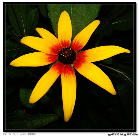 六月荷摄影《秋花》 - 六月荷花 - 六 月 荷 塘