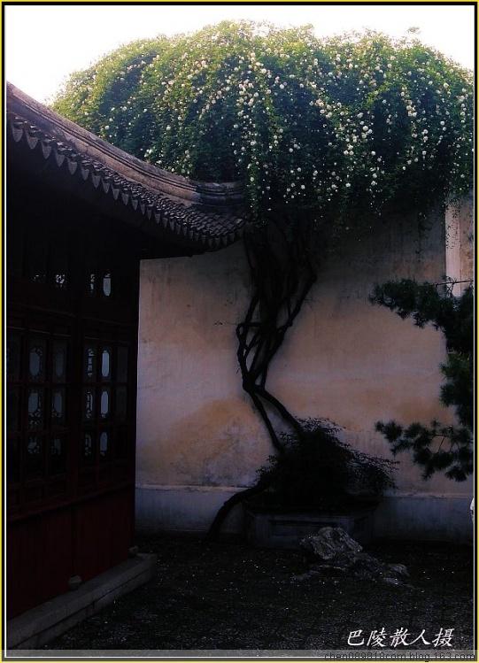 [原]旅游摄影《苏州狮子林》14p - 巴陵散人 - 巴陵散人影室