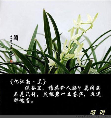 [音画]风流四君子 - 晴玥 -