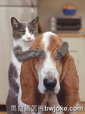 可爱的动物 - 千年转身 - 从古至今,
