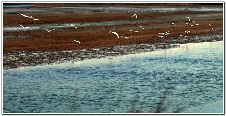 (原创)黄海湿地自驾游(2)——珍禽 - 鱼笑九天 - 鱼笑九天