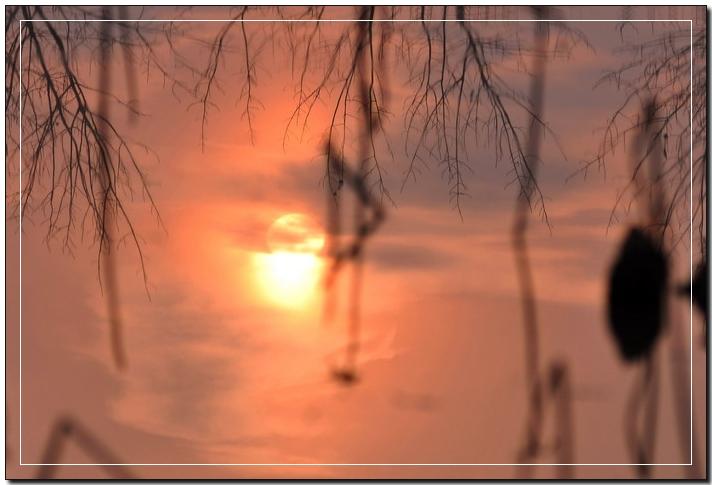 (原创)冬日有暖阳 虽败亦从容 - 鱼笑九天 - 鱼笑九天